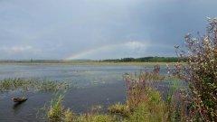 Gx-rainbow-pf.JPG